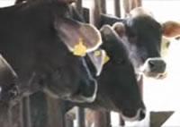 Clic para ver video Taller parásitos bovinos